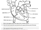 Scientific Drawing Of A Heart Free Parts Of the Heart Worksheets Describe the Function Of the