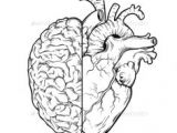 Scientific Drawing Of A Heart How to Draw A Heart Science Drawing Lesson Drawing Ideas 3 In