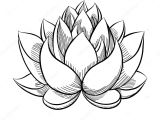 Simple Drawing Of Lotus Flower 8 Lotus Drawing Bud for Free Download On Ayoqq org