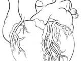 Simple Line Drawing Of A Heart Human Heart Tattoo by Metacharis On Deviantart Always A Parents