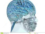 Skull Drawing Brain 3d Illustration Of A Transparent Human Refractive Skull with