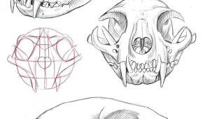 Skull Drawing Diagram Cat Skull Anatomy Google Search Cat Tattoo Final Drawi