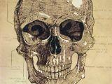 Skull Drawing for Halloween Skull Chart Halloween Pinterest Chart and Illustrations