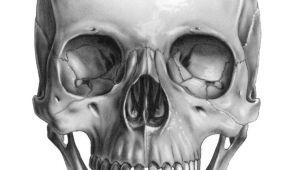 Skull Drawing Front Skull Front Art Pinterest Skull Skull Art and Drawings
