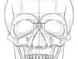 Skull Drawing Lesson Plan 184 Best Drawing Human Humanoid Images Drawing Tutorials Figure