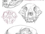 Skull Drawing Outline Cat Skull Anatomy Google Search Cat Tattoo Final Drawi
