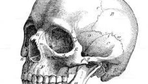 Skull Drawing Profile Image Result for Skull Profile Art Illustration Drawings Skull Art