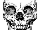Skull Drawing Sharpie Vector Black and White Illustration Of Human Skull with A Lower Jaw