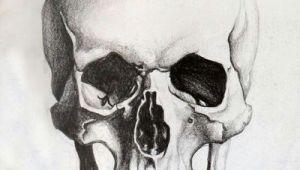 Skull Drawing with Labels Skull Sketch Tattoo Skull Sketch Drawings Skull Art