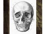 Skull without Jaw Drawing Human Skull Print In Black Anatomical Wall Art Decor Ska011wa4