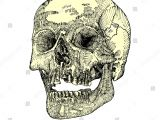 Skull without Jaw Drawing Royalty Free Stock Illustration Of Anatomic Skull Open Mouth Jaw