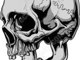 Skull without Jaw Drawing Side View Of Gray Human Skull Tats Pinterest Skull Skull Art