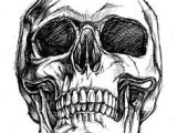 Skull without Jaw Drawing Vector Black and White Illustration Of Human Skull with A Lower Jaw