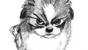 Small Animals Images Drawing Sketch Of Small Angry Dog Dog Sketch Dog Drawing Dog