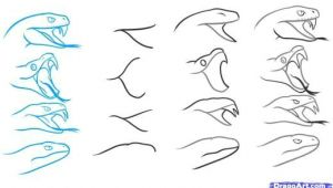 Snake Drawing Easy Step by Step Step 4 How to Draw A Snake Head Draw Snake Heads