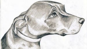 Tonal Drawing Of A Dog tonal Drawing Free Download On Ayoqq org