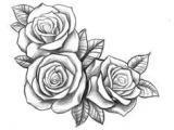 Types Of Roses Drawings Resultado De Imagen Para Three Black and Grey Roses Drawing Tattoo