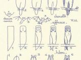 V Easy Drawing Les Animaux 13 Owl French Art and Art Tutorials