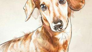 Wiener Dog Drawing Dachshund Dachshund Teckels Images Pinterest Dachshunds