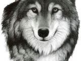Wolf Drawing Charcoal 615 Best Native Art Images Paintings Artworks Drawings