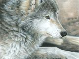 Wolf Drawing Charcoal Colored Pencil Drawing Of A Wolf This is Magnificent Ink