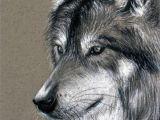Wolf Drawing Charcoal Lainy Art Lainyart On Pinterest