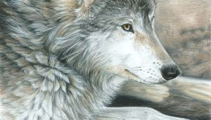 Wolf Drawing Colorful Colored Pencil Drawing Of A Wolf This is Magnificent Ink