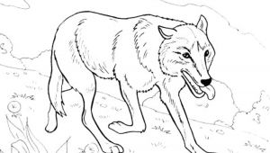 Wolf Drawing Colour Best Of Wolf Coloring Pages Brittartdesign Us