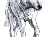 Wolf Drawing Detailed 180 Best Wolf Drawings Images Drawing Techniques Drawing