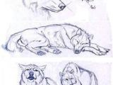 Wolf Drawing Front 206 Best Wolf Sketch Images In 2019 Drawing Techniques Animal