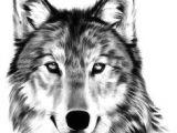 Wolf Drawing Front Die 63 Besten Bilder Von Wolf In 2019