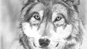 Wolf Drawing Graphite 109 Best Wolf Images Wolf Drawings Art Drawings Draw Animals
