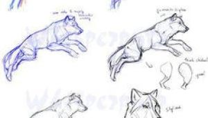 Wolf Drawing Reddit 86 Best Tutorials Images Drawing Techniques Easy Drawings Learn
