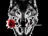 Wolf Drawing Transparent Romantic Wolf Tattoo Tattoos