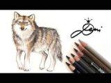 Wolf Drawing Tutorial Youtube Die 22 Besten Bilder Von Realistisch Zeichnen Lernen Tutorials