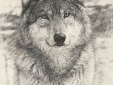 Wolf Drawing with Name Pin by isis Spiegel On Wolves Wolf Amazing Drawings Drawings