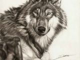 Wolf Drawing with Pencil 109 Best Wolf Images Wolf Drawings Art Drawings Draw Animals
