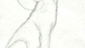 Wolf Realistic Drawing Step by Step 53 Best Werewolf Drawings Images Werewolf Werewolves Fantasy Art