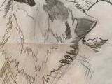 Wolfblood Drawing Wolfblood Book 1 the Beginning Of A New Era Kathleen Wattpad