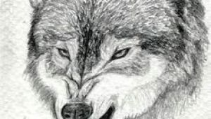Wolves Draw Bias 31 Best More Than A One Wolf Pack Images Drawings Anime Wolf Dragons
